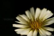 _Blog-20111108-230932